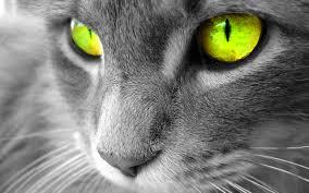 catphotogenic