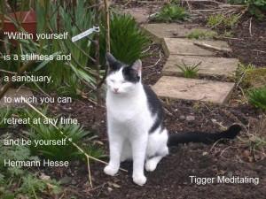 tigger_meditating