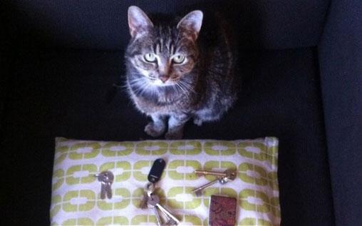 cat_keys